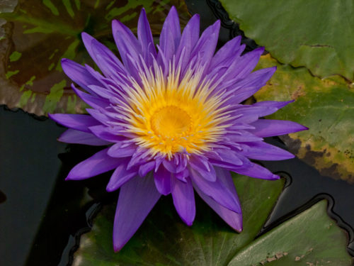 ultra-violet-001